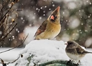 feeding birds, winter, seeds