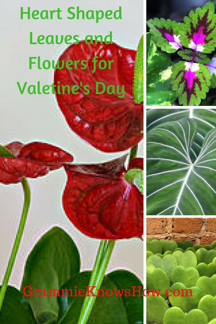 growing gifts, Valentines gifts for gardeners, growing gifts for valentines day