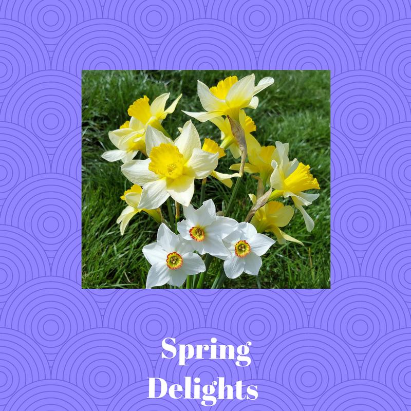 Low maintenance gardens ideas, maintenance free flower garden, low maintenance gardening,