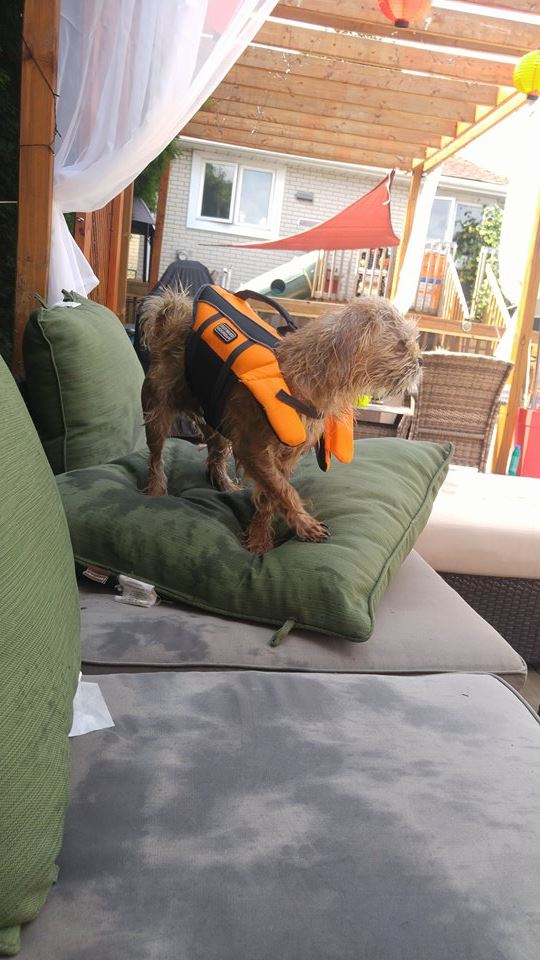 summer safety for pets, life vests for our dogs, swim safety for pets