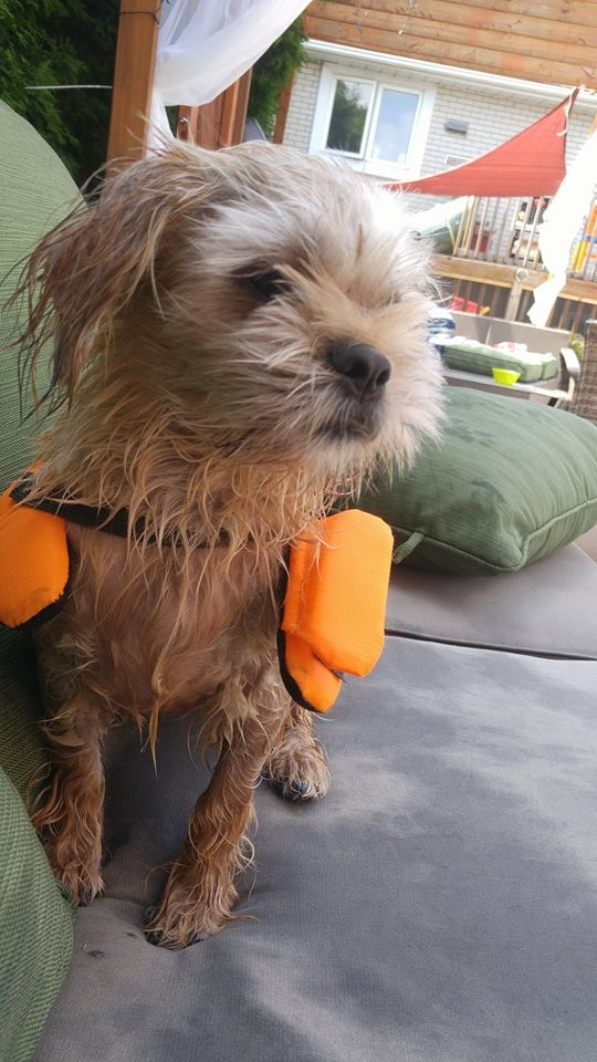summer safety for pets, summer time life vests for pets, life preserver for dogs.