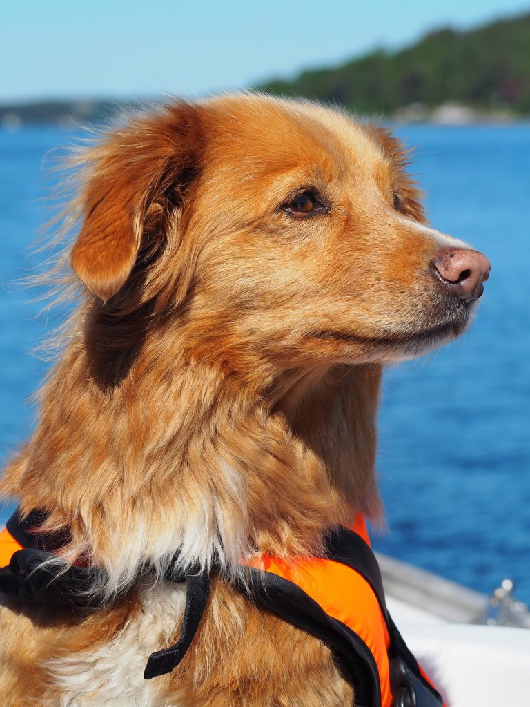 summer safety tips for dogs, life vests for dogs, keeping Fido safe during summer