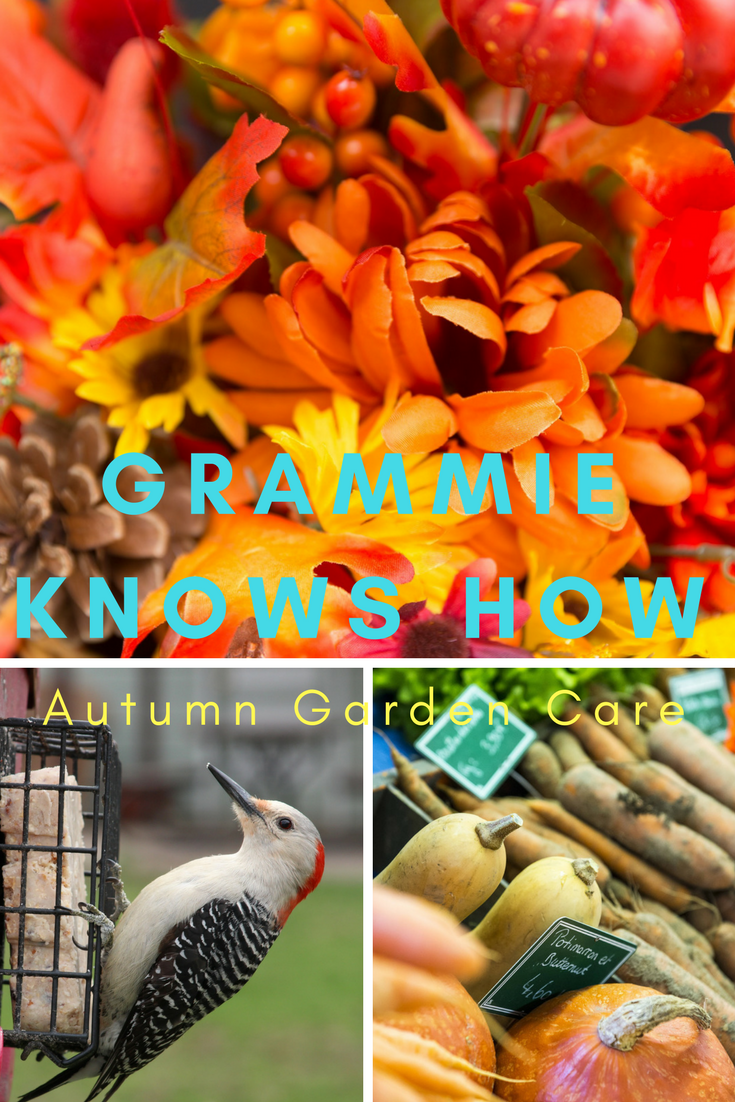 autumn garden ideas, grammieknowshow, fall gardening chores, autumn gardens care home, autumn garden flowers, autumn garden plants