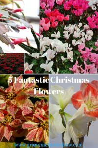 hostess gifts, christmas plants, plants to give as gifts