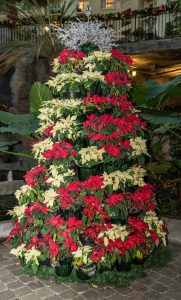 best plants for Christmas gifts, poinsettia, Christmas flowers